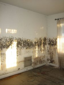 Best-Mold-Remediation-1