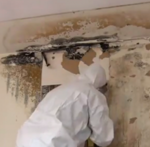 Do-It-Yourself-Mold-Remediation-1