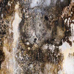 mold-siteicon